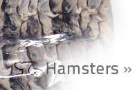 link-hamsters