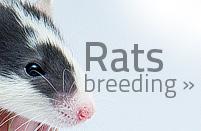 link-rats